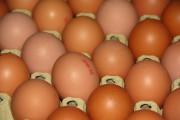 eigene Eier
